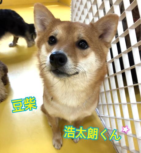 可愛いわんちゃん達がいっぱい(*´˘`*)_f0357682_23183838.jpg