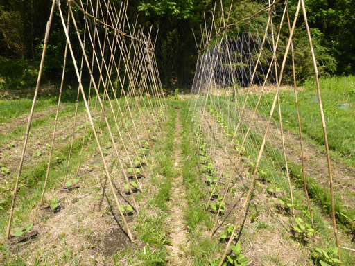 5月下旬の自然農畑_d0366590_19452825.jpg