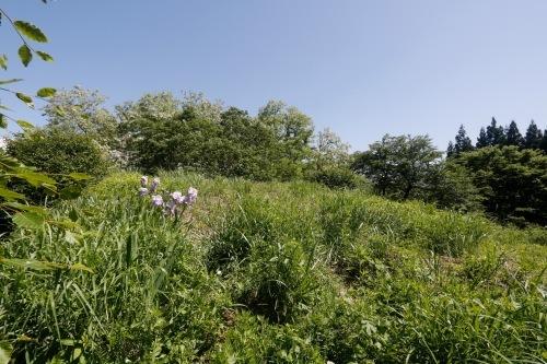 アトリエの芝置屋根_e0054299_14061573.jpg