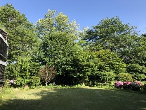 アトリエの芝置屋根_e0054299_16291125.jpg