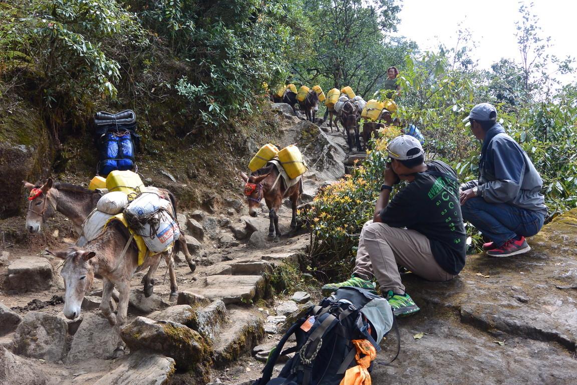 """2019年5月 『ヒマラヤピークトレッキング 1.アプローチ』May 2019 \""""Himalaya Peak Trekking 1.Approach\""""_c0219616_12025663.jpg"""