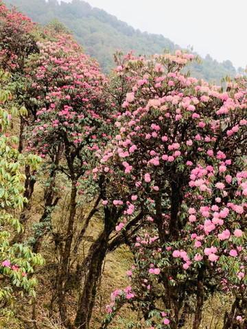 """2019年5月 『ヒマラヤピークトレッキング 1.アプローチ』May 2019 \""""Himalaya Peak Trekking 1.Approach\""""_c0219616_12070118.jpg"""