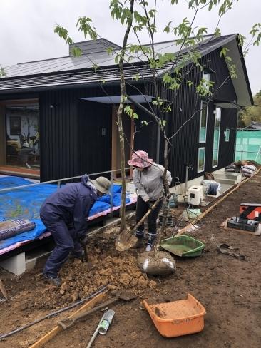 里山モデルハウス植栽工事_a0059217_23264170.jpg