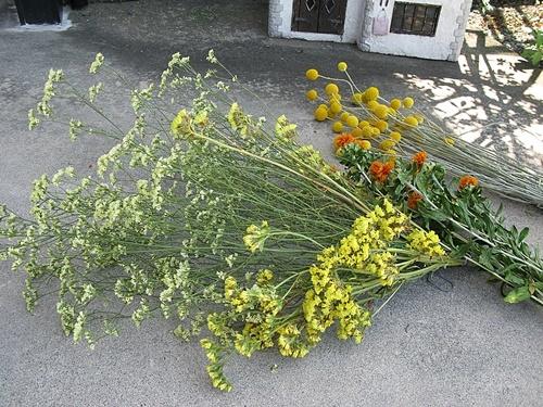 花後の楽しみ その4 ドライフラワー_f0129726_14144040.jpg