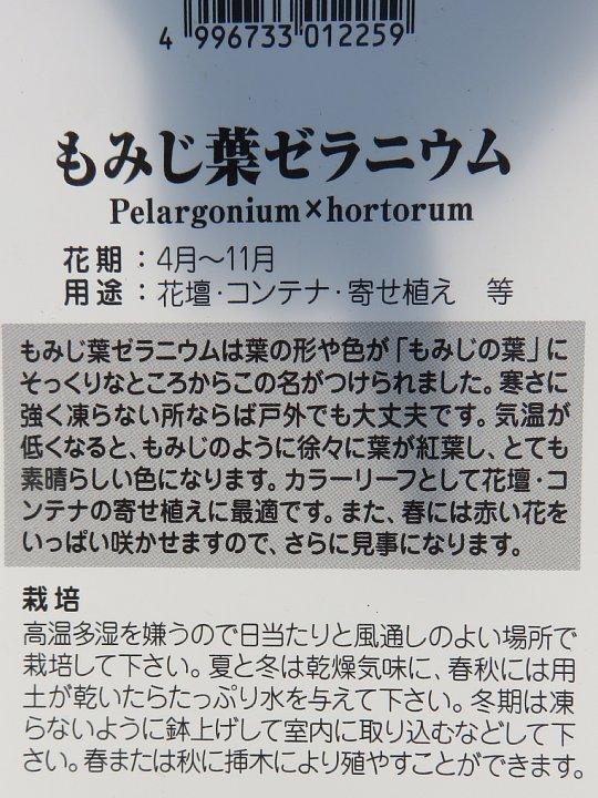 2019年6月9日 もみじ葉ゼラニウム (^^♪_b0341140_14402490.jpg