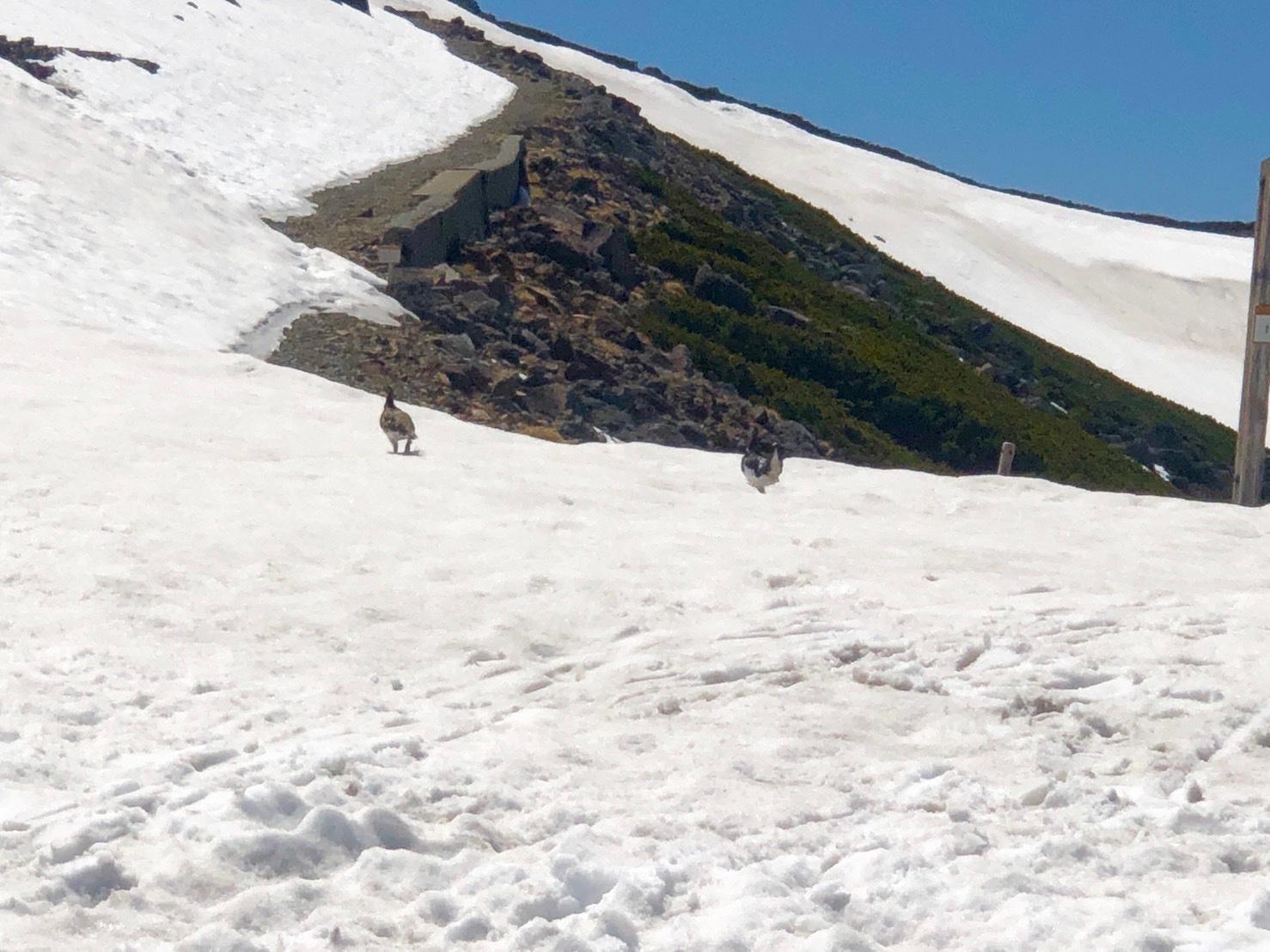 大雪渓で滑ってきました♪_e0248949_02425808.jpg