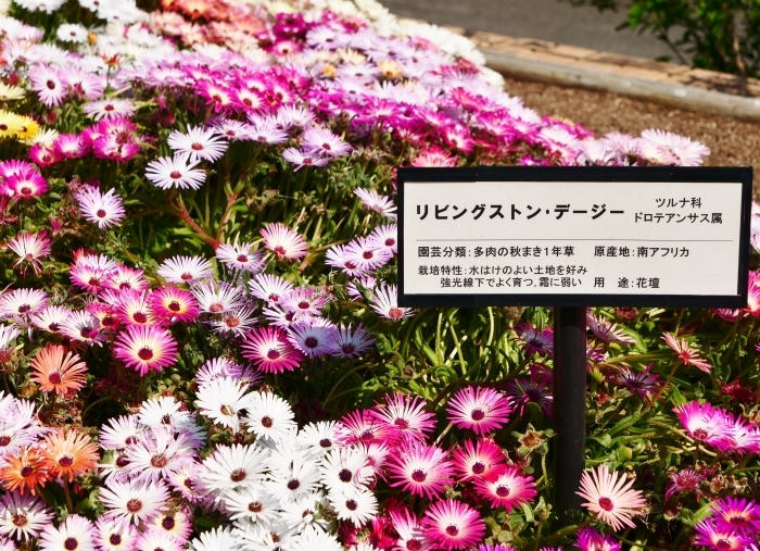 和歌山県植物公園緑花センター  2019-06-03 00:00   _b0093754_21183971.jpg