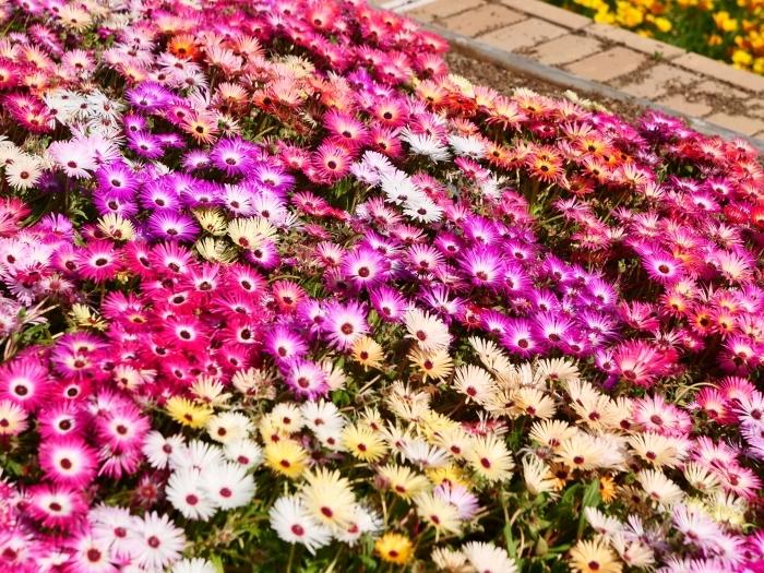 和歌山県植物公園緑花センター  2019-06-03 00:00   _b0093754_21185855.jpg