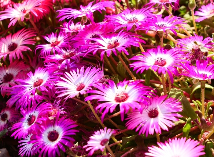 和歌山県植物公園緑花センター  2019-06-03 00:00   _b0093754_21191352.jpg