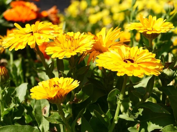和歌山県植物公園緑花センター  2019-06-03 00:00   _b0093754_21201739.jpg