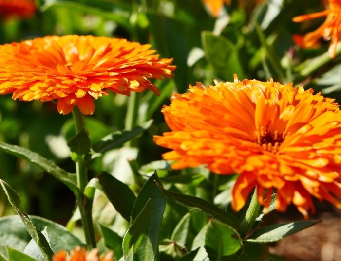和歌山県植物公園緑花センター  2019-06-03 00:00   _b0093754_21203440.jpg