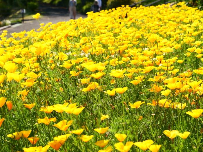 和歌山県植物公園緑花センター  2019-06-03 00:00   _b0093754_21210193.jpg