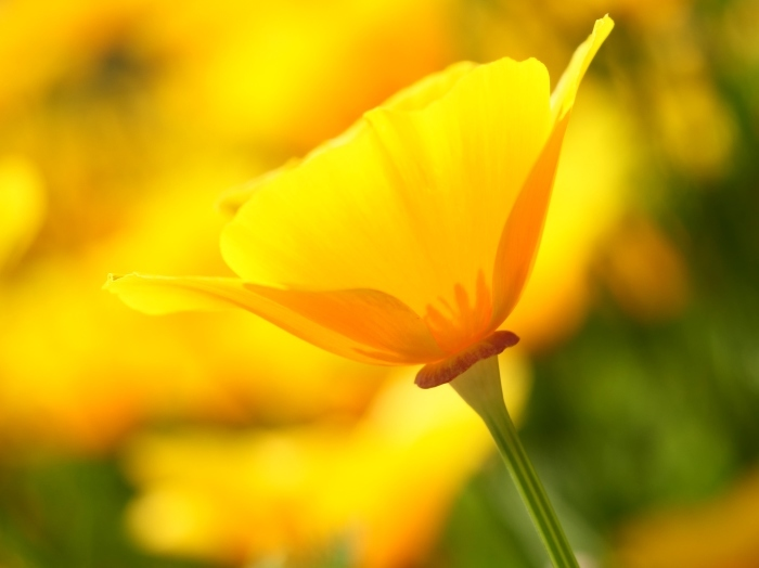 和歌山県植物公園緑花センター  2019-06-03 00:00   _b0093754_21211663.jpg