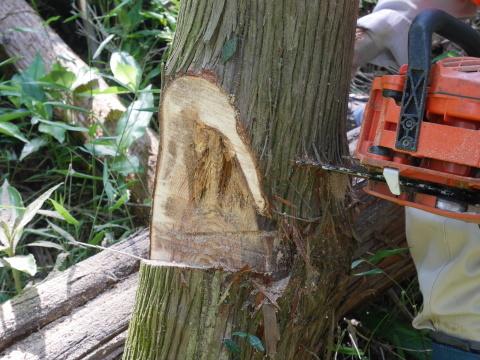 やはり間伐は危険で難しい5・30六国見山臨時手入れ_c0014967_08532487.jpg