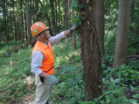 やはり間伐は危険で難しい5・30六国見山臨時手入れ_c0014967_08534318.jpg