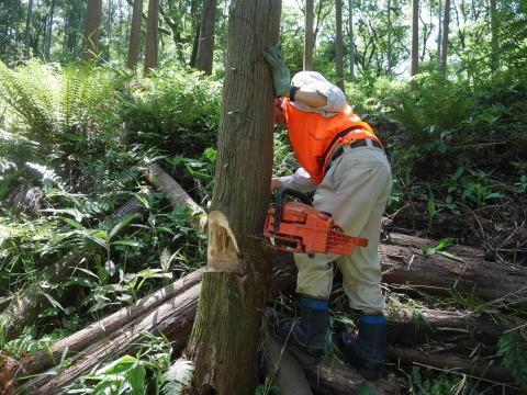 やはり間伐は危険で難しい5・30六国見山臨時手入れ_c0014967_08540255.jpg