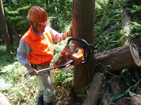 やはり間伐は危険で難しい5・30六国見山臨時手入れ_c0014967_08541895.jpg