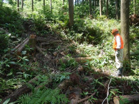 やはり間伐は危険で難しい5・30六国見山臨時手入れ_c0014967_08543393.jpg