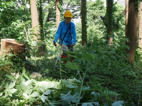 やはり間伐は危険で難しい5・30六国見山臨時手入れ_c0014967_08551910.jpg