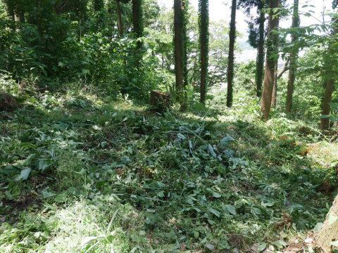 やはり間伐は危険で難しい5・30六国見山臨時手入れ_c0014967_08553587.jpg