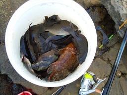 今日もイメージを釣りに 035 ハリセンボンの脱出および隠遁欲求_c0121570_11054529.jpg