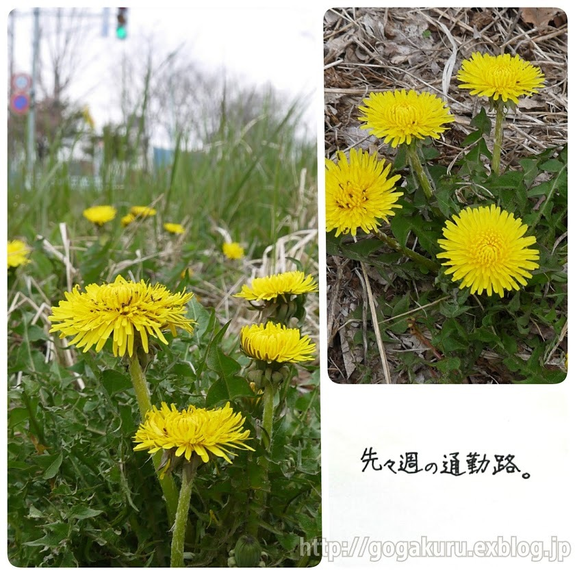 【English】dandelion_e0132084_07454524.jpg