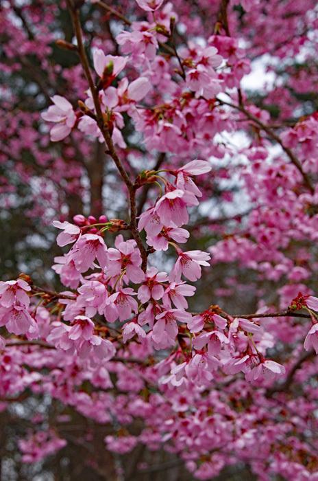 桜物語 2019 春 その7 花見山公園_d0016587_18312487.jpg