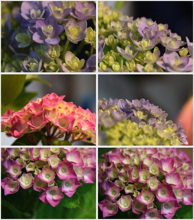 家ごはんに、庭のお花に、手作りスウィーツにと、今日はあれこれ盛りだくさん(*⌒∇⌒*)テヘ♪_b0175688_20313919.jpg