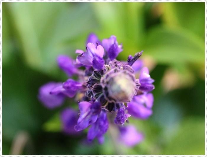 家ごはんに、庭のお花に、手作りスウィーツにと、今日はあれこれ盛りだくさん(*⌒∇⌒*)テヘ♪_b0175688_20314260.jpg
