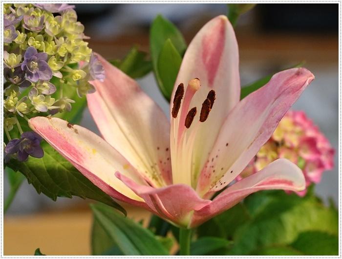 家ごはんに、庭のお花に、手作りスウィーツにと、今日はあれこれ盛りだくさん(*⌒∇⌒*)テヘ♪_b0175688_20314634.jpg
