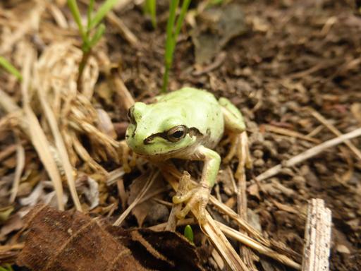5月下旬の自然農畑_d0366590_07223126.jpg