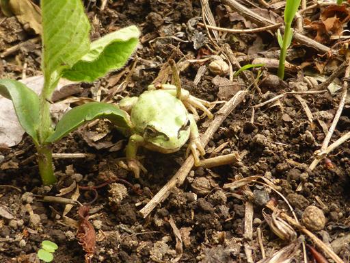 5月下旬の自然農畑_d0366590_07223178.jpg