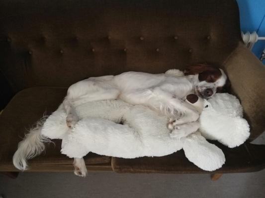 犬のジェイク いろいろ_d0090294_22400542.jpg