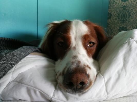 犬のジェイク いろいろ_d0090294_22450535.jpg