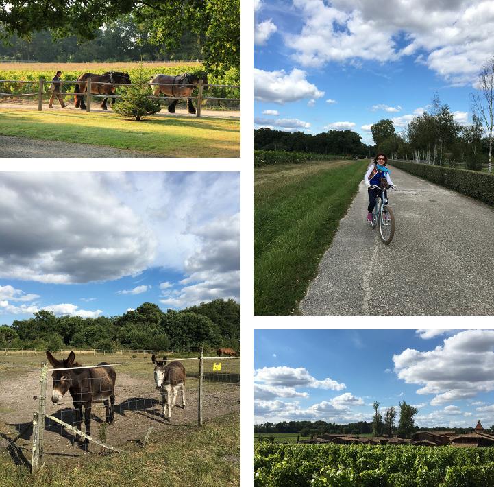 ワインと美食の旅、ボルドーとバスク地方_c0313595_21281792.jpg