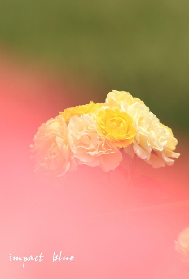 アイガモ公園の花壇のにて(^^)/ ~最終回~_a0355908_09533881.jpg