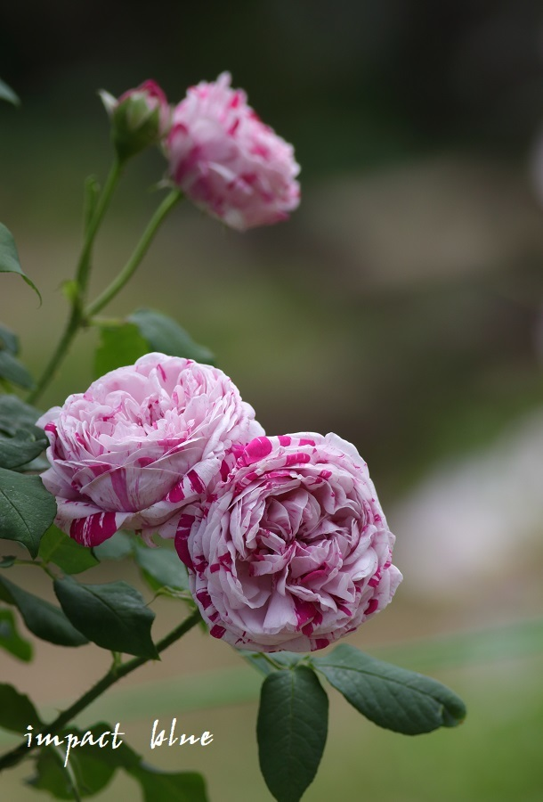 アイガモ公園の花壇のにて(^^)/ ~最終回~_a0355908_09535225.jpg