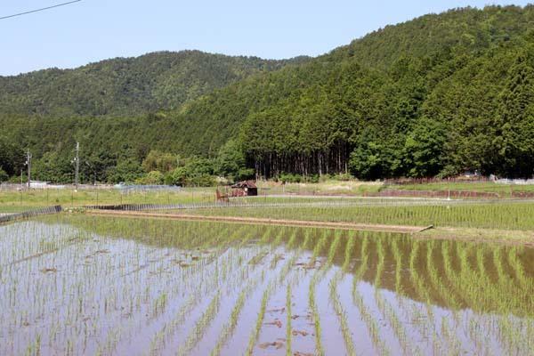 岩倉村松の棚田_e0048413_21074677.jpg