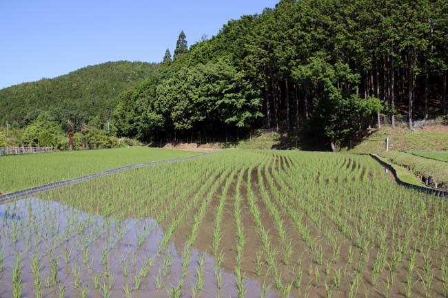 岩倉村松の棚田_e0048413_21075223.jpg