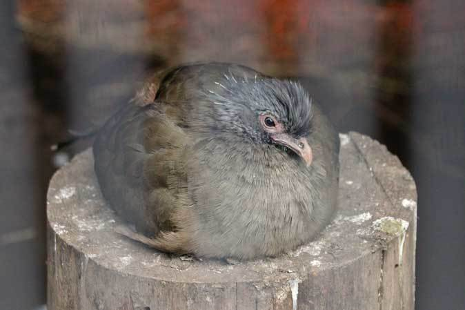 智光山公園こども動物園:ふれあい広場の多彩な鳥たち~色鮮やかな鳥たちとカラフトフクロウ_b0355317_20560977.jpg