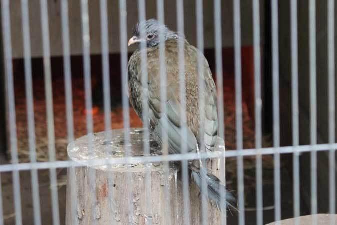 智光山公園こども動物園:ふれあい広場の多彩な鳥たち~色鮮やかな鳥たちとカラフトフクロウ_b0355317_20575417.jpg