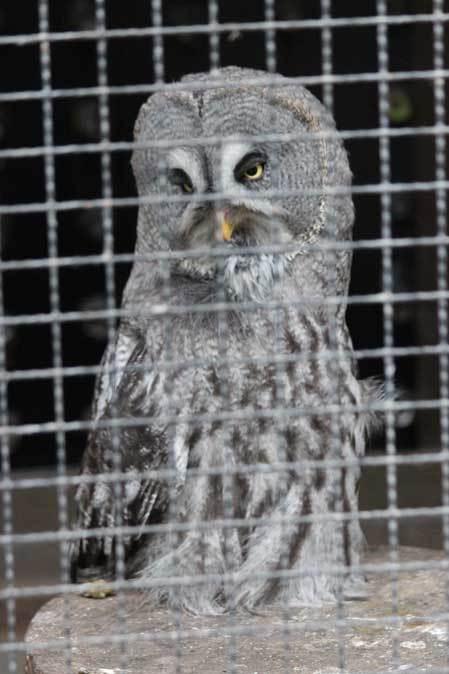 智光山公園こども動物園:ふれあい広場の多彩な鳥たち~色鮮やかな鳥たちとカラフトフクロウ_b0355317_21030703.jpg