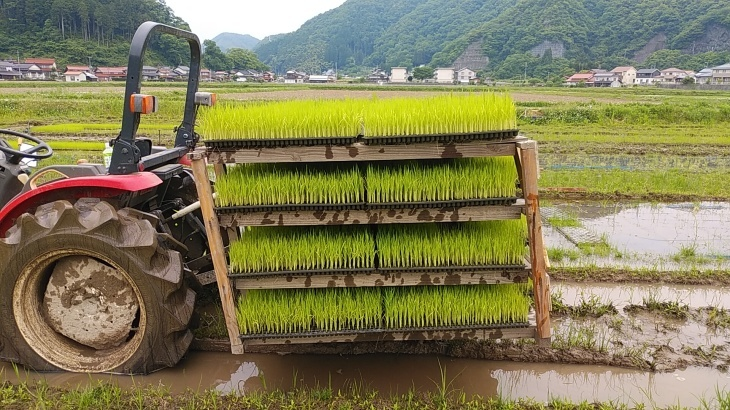 自然栽培苗に突入_b0274329_13321260.jpg