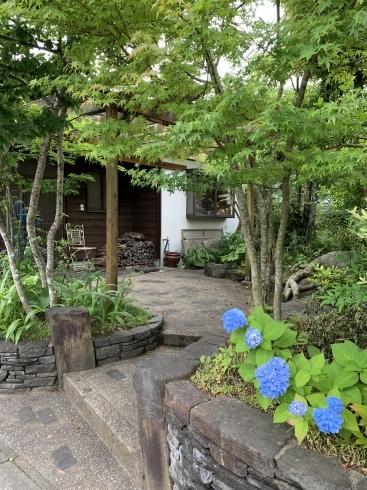 梅雨入りした宮崎・・・紫陽花が似合います_b0137969_06565964.jpeg