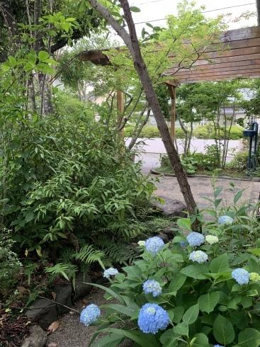 梅雨入りした宮崎・・・紫陽花が似合います_b0137969_06595195.jpeg
