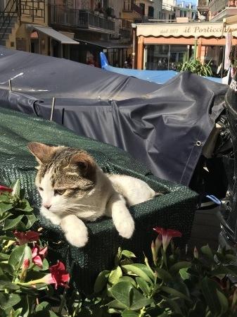 今日のマナローラ、猫たちの井戸端会議_a0136671_03555960.jpg