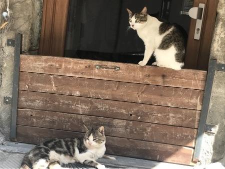 今日のマナローラ、猫たちの井戸端会議_a0136671_03573589.jpg