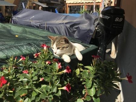 今日のマナローラ、猫たちの井戸端会議_a0136671_04001233.jpg