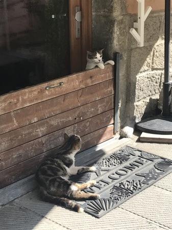 今日のマナローラ、猫たちの井戸端会議_a0136671_04073897.jpg