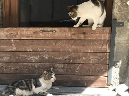 今日のマナローラ、猫たちの井戸端会議_a0136671_04201127.jpg
